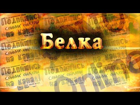 Белка Сонник онлайн   Sonoonline  Сон про Белку