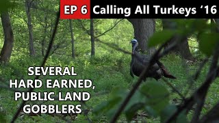 Public Land Gobbler Fools Me For The Last Time! - Calling All Turkeys