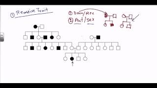 Pedigree Analysis - Autosomal Recessive