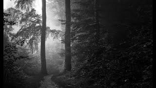ЖЕСТЬ!!! Настоящего Тролля видели в лесах Карелии.