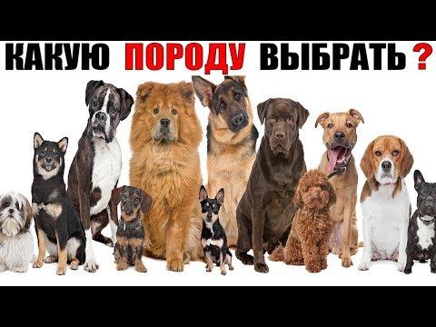 , title : 'Какая самая лучшая порода собак? (Самый большой ТОП 60 пород собак)