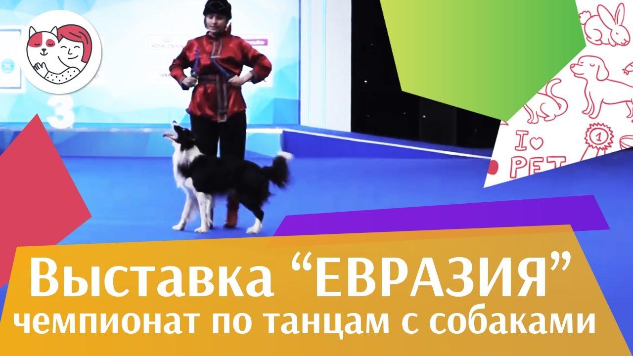 Чемпионат РКФ по танцам с собаками 5 на Евразии 17 ilikepet