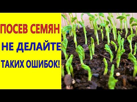 Посев семян. Не делайте таких ошибок при посеве семян, чтобы получить хорошую всхожесть семян!