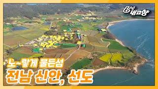 '수선화 향기 가득~ 노랗게 물든 섬' 동영상 배경 썸네일