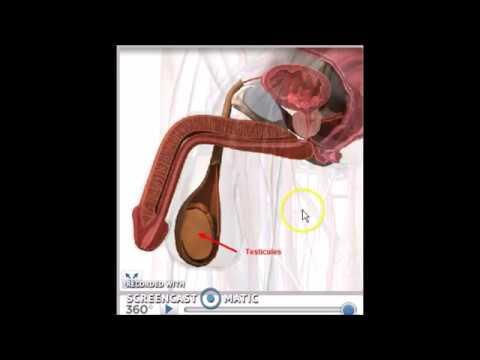 Le psoriasis les articulations du médicament