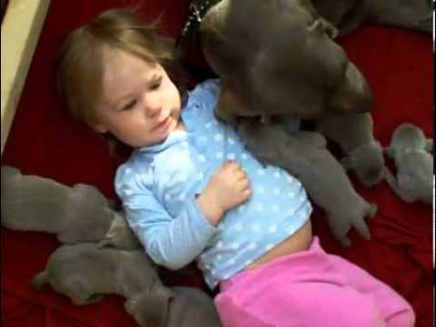 Avalon and her puppies