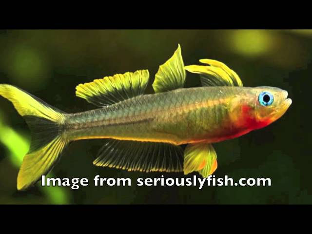 The Top 10 Best-Looking Freshwater Fish