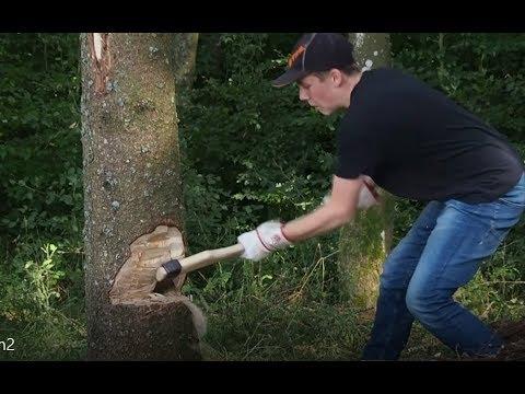 Baum fällen mit der Axt