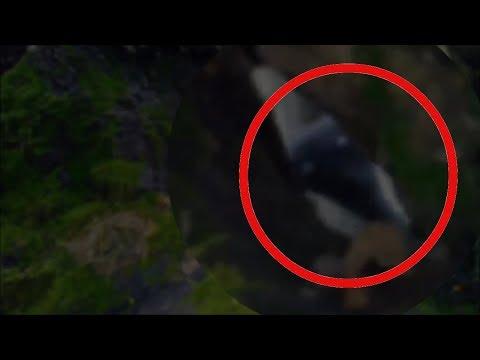 ИНОПЛАНЕТЯНИН ПОПАЛ В КАДР ВИДЕО В ЛЕСУ   странное существо / пришелец в лесу