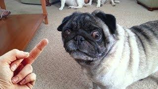 Dog Really Hates Middle Finger - Compilation NEW