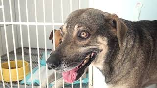 Voluntárias que cuidam de animais denunciam envenenamento de cães em Patos de Minas