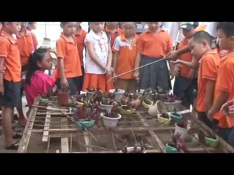 Bill Gates School TV No 7 - Planting Trees
