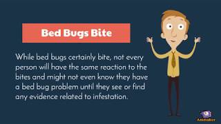 5 Facts About Bed Bugs
