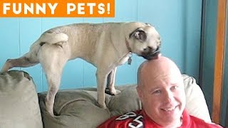 Funniest Pets & Animals of the Week Compilation May 2018 | Hilarious Try Not to Laugh Animals Fail
