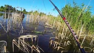 Летняя рыбалка на карпа с михалычем
