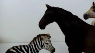 Rozvedený kůň se zebrou