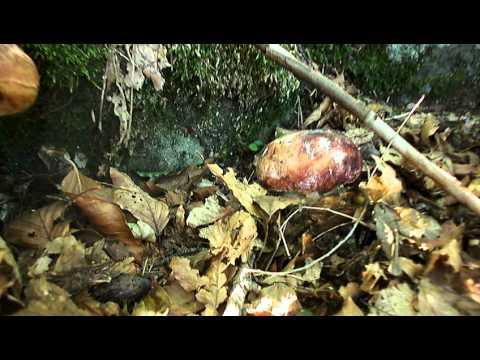 Crescita di unghie allatto di trattamento di un fungo
