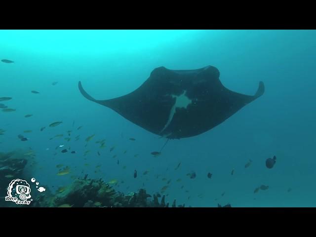Diving Raja Ampat 2018 in 4k - Coral reefs & Sharks & Mantas