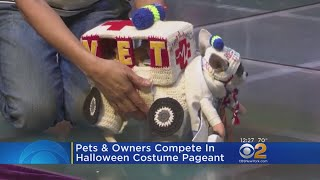 Pets, Owners Compete In Halloween Costume Pageant