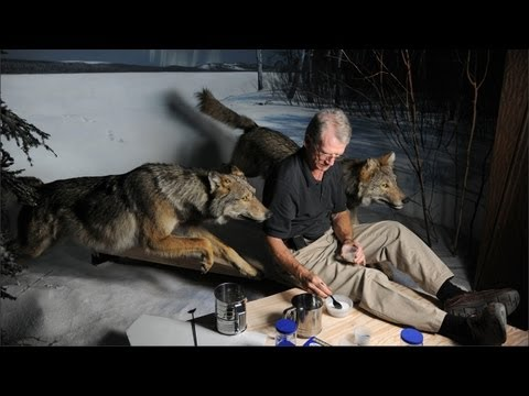 Museum Updates Lighting In Wolf Diorama To Be Moon-Realistic