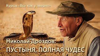 """Николай Дроздов: в мире животных пустыни \\ лекция для """"Всё как у зверят"""""""