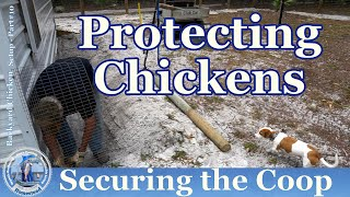 Backyard Chickens Setup #10 Securing The Coop