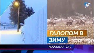 В районах Новгородской области наступила настоящая зима