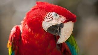 Смешные попугаи танцуют и поют.Смешные моменты.