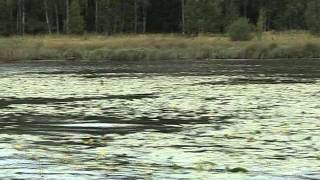 Рыбалка в челябинской области зюраткуль