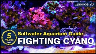 5 Minute Saltwater Aquarium Guide Episode #26 - Cyanobacteria