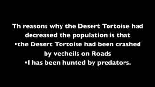 Save the Endangered Desert Tortoise