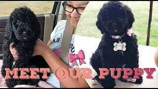 Bringing Home Our New Goldendoodle Puppy  | 7 week old Goldendoodle Puppy | R HOUSE