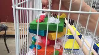 Getting My New Birds + Supplies