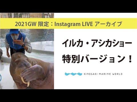 GWライブ:イルカ・アシカショー特別ver.