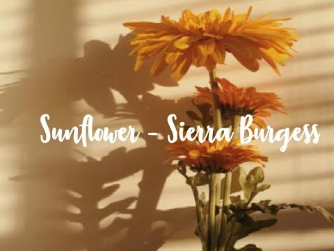 Sunflower [] Sierra Burgess [] 1 Hour Loop Mp3