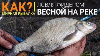 Рыбалка ловля рыбы фидером на реке