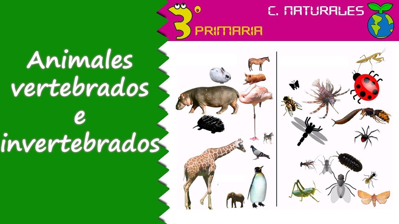 Ciencias de la Naturaleza. 3º Primaria. Tema 5. Animales invertebrados y vertebrados