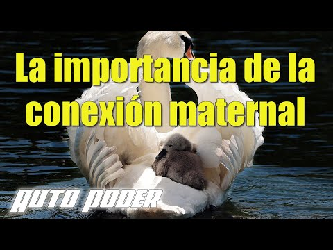 La importancia de la conexión maternal