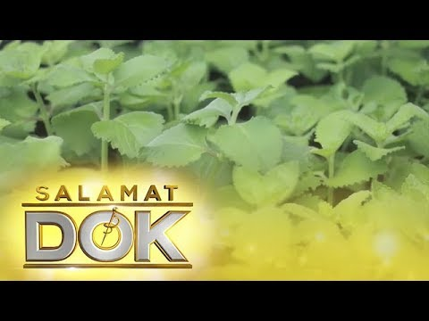 Salamat Dok: Health benefits of Oregano