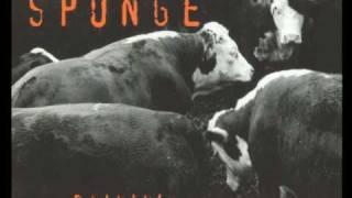 "Fields - ""Sponge"" 1994 Rare Live"