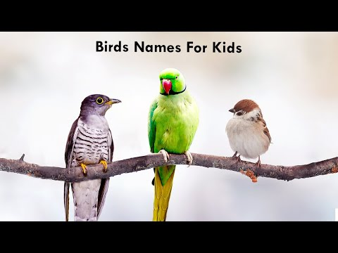 Download Top 10 Pigeon Birds Name Learning Video For Kids