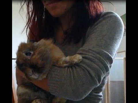 Vermi di trattamento di scienza veterinari