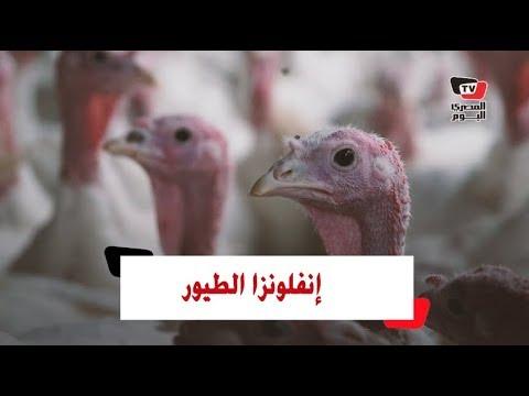 نوع جديد من إنفلونزا الطيور في مصر