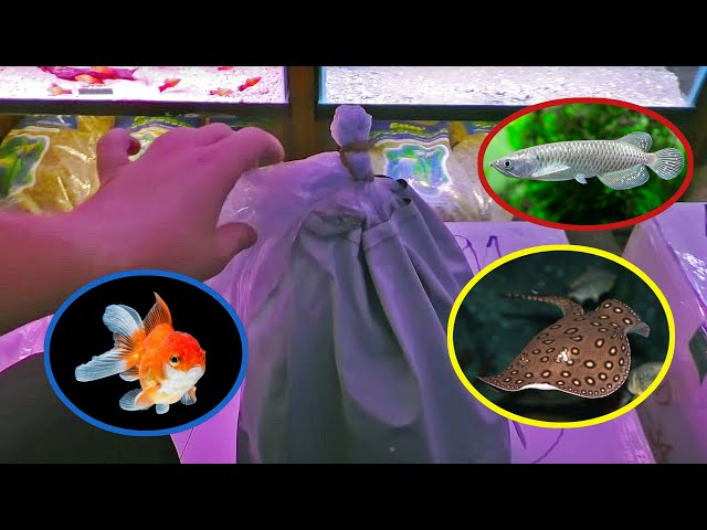 MOTORO STINGRAY AQUARIUM FISH UNBOXING