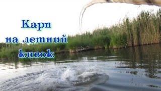 Ловля дикого карпа - сазана летом на боковой кивок***carp fishing