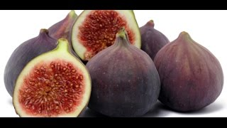 HOW TO GROW FIGS IN A CONTAINER OR POT