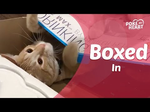 Cat Doesnt Allow Kitten To Come Out Of Box