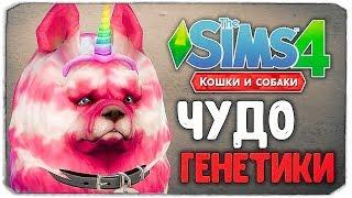 """ЧУДО ГЕНЕТИКИ, КАКОЙ ПЕСИК САМЫЙ МИЛЫЙ? - The Sims 4 """"Кошки и Собаки"""""""