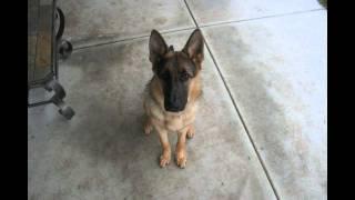 Из щенка во взрослую собаку за 40 секунд