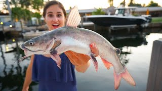 VENOMOUS Catfish Catch Clean COOK! Trash Fish Taste Test!